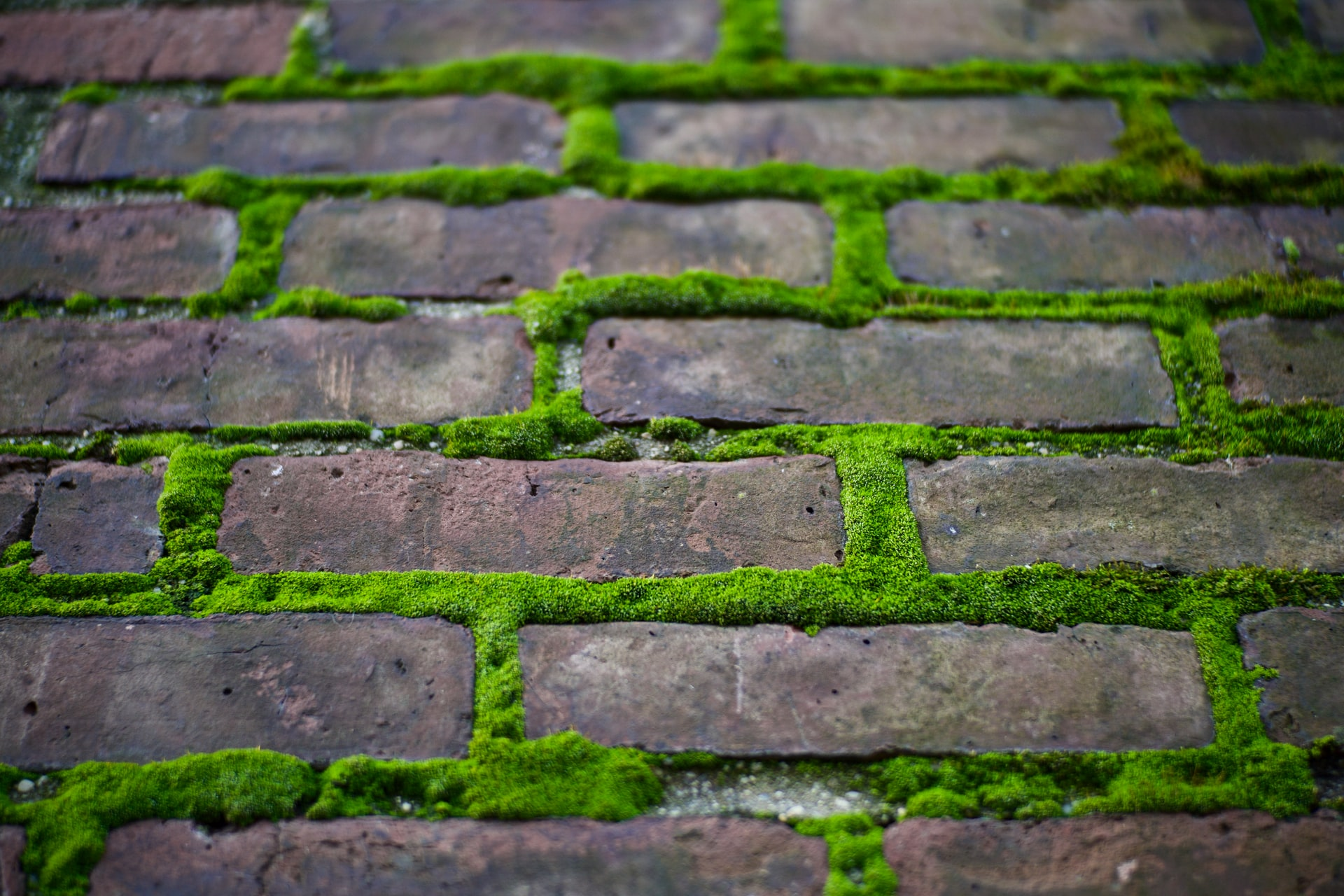 Moss Problems on your Chimney